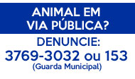 Telefone para denuncia de animal em via pública